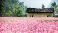 Các cánh đồng hoa đón Xuân bất tận tại Việt Nam