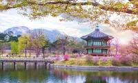 Hàn Quốc những điều cấm kỵ không may mắn theo quan niệm