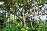 Khám phá hệ thực vật phong phú cùng khung cảnh thiên nhiên tuyệt vời của bán đảo Sơn Trà