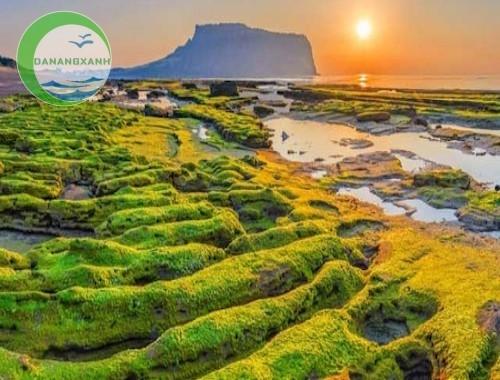 Tour đảo Jeju Hàn Quốc