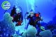 Tour lặn Diving đảo Cù Lao Chàm lặn bình khí